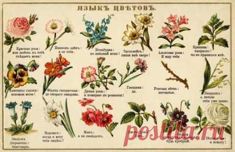 7 любопытнейших фактов о цветах - Садоводка