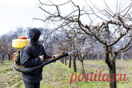 Чем обработать деревья осенью от болезней и вредителей | Уход за садом (Огород.ru)