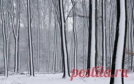Снежные чудеса, которые увидишь раз в жизни