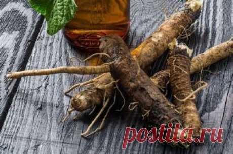 Чай из корня лопуха: под нашими ногами целое богатство для очистки крови, кожи и лимфы - HeadInsider