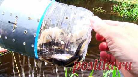 Как сделать уловистую ловушку для рыбы из ПЭТ бутыли Ловить рыбу можно разными способами, даже ловушками из обычных ПЭТ бутылок. Конечно, трофеев ими не добыть, но вполне можно заготовить мелкой рыбешки для сушки, приготовления консервов или для живца.Что потребуется:ПЭТ бутыль 5 л;бутылка 1-2 л;веревка;термоклей;большая гайка или грузило.Процесс