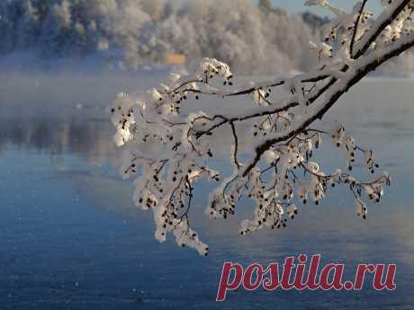 Фото Морозные подарки... - фотограф Ирина З. - пейзаж, природа - ФотоФорум.ру