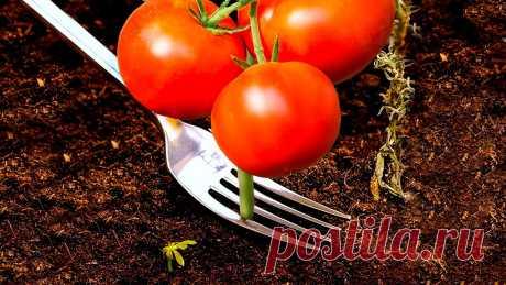 36 ГЕНИАЛЬНЫХ САДОВЫХ ЛАЙФХАКОВ, КОТОРЫЕ РЕАЛЬНО РАБОТАЮТ ПОТРЯСАЮЩИЕ СОВЕТЫ ДЛЯ САДА Садоводство - одно из самых крутых хобби, которое помогает расслабиться, даже если у вас стресс. А еще выращивание овощей - круто...