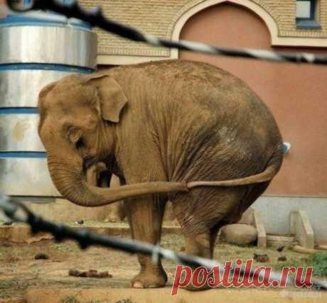 Когда слонику нечем заняться