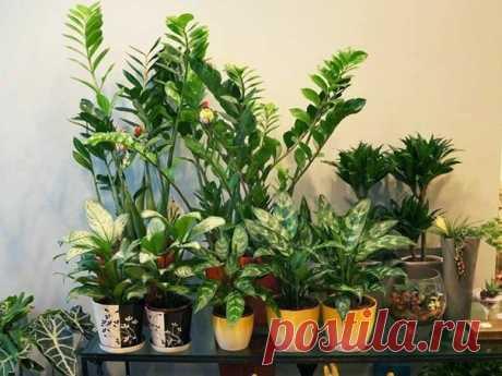 Полезные и вредные комнатные растения.