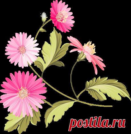 Рисованные цветы в формате PNG