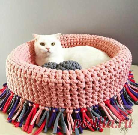 Любители кошек лелеят своих питомцев. Каждый хозяин хочет дать своей кошке всё самое лучшее. Для домашних животных нужно приобретать много разных предметов, в том числе и лежанки. Существует множество специализированных магазинов для животных. Но не все могут себе позволить купить дорогостоящие вещи для питомцев.