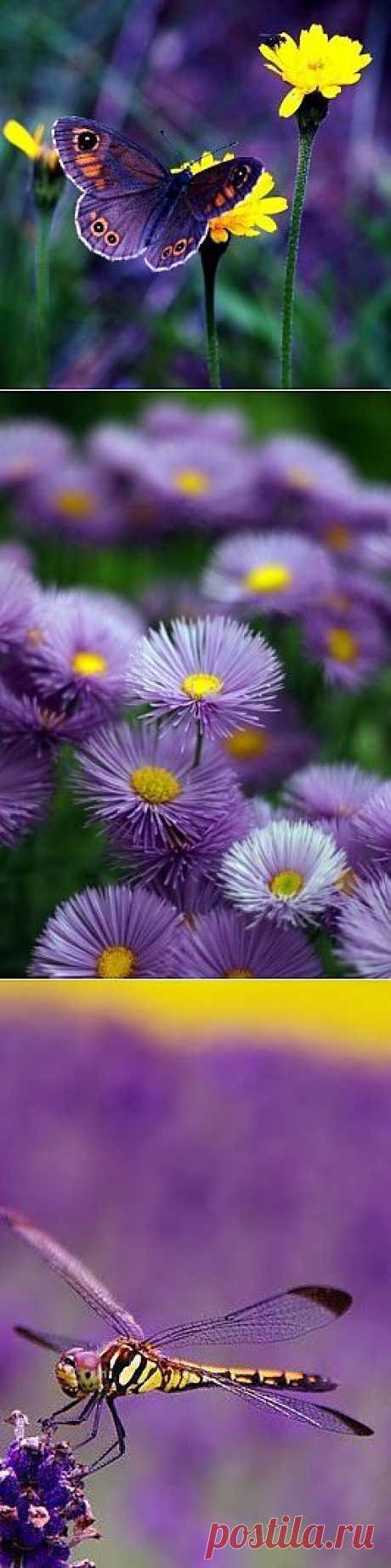 El humor violeta: se inspiramos en el color
