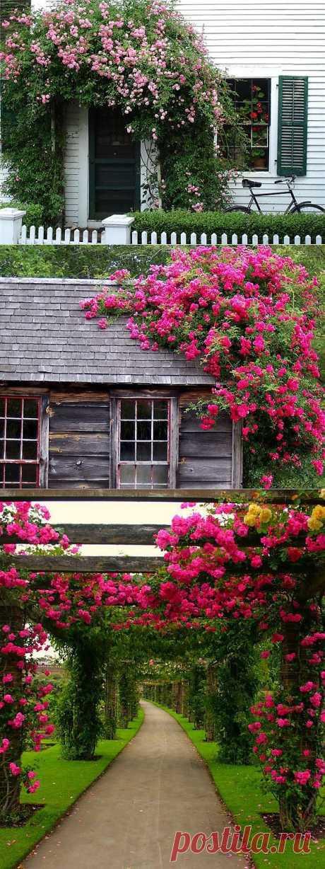 Вьющиеся розы – цветы, которые украсят ваш дом | Дом Мечты