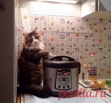 Дом там, где тебе котик готовит супчик!