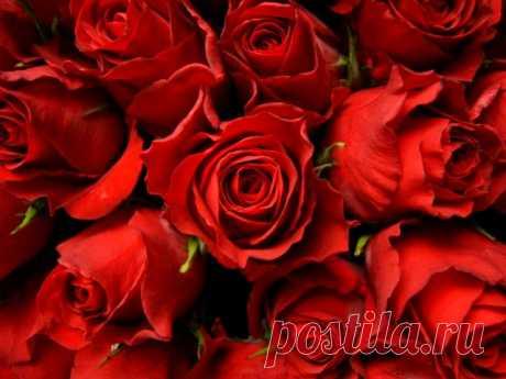 Чтобы розы стояли дольше (и как оживить вянущий букет) — Полезные советы