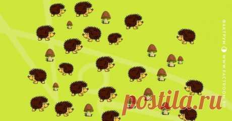 Отделите ёжиков от грибов Иногда детские головоломки вводят взрослых в полный ступор. Конечно же, детская логика отличается от взрослой, поэтому малыши и решают некоторые задачки намного быстрее. Предлагаем читателю попробоват...