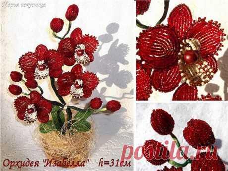 Мк орхидеи Изабелла от Марии Сипатовой