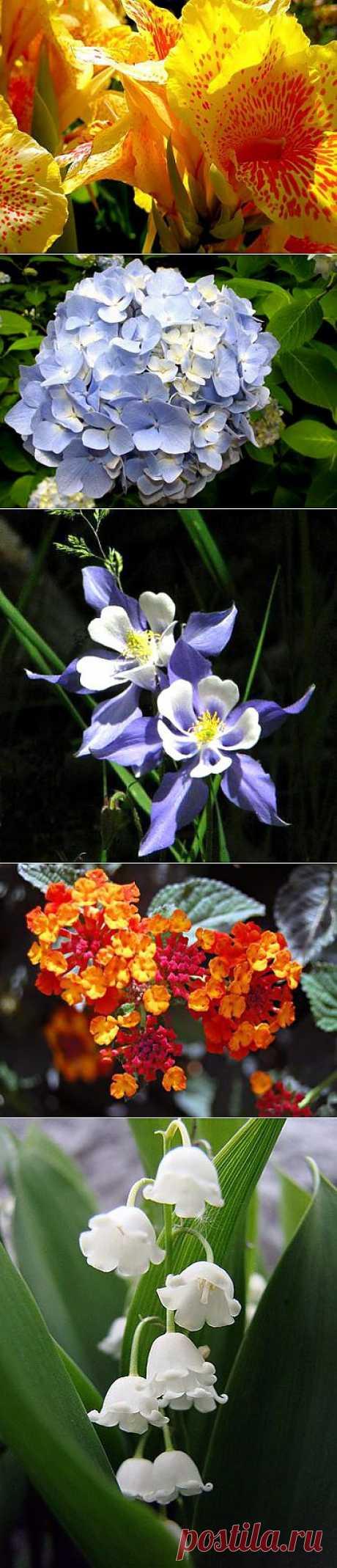 16 самых красивых цветков в мире