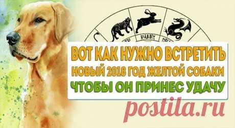 Чтобы год Собаки был удачным, нужно обязательно почтить покровителя года: — Полезные советы