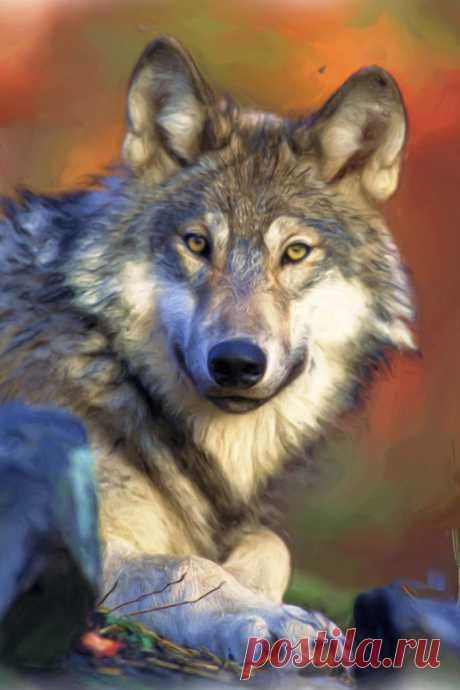 Загадки о волке с ответами – 50 самых лучших загадок – ladyvi.ru
