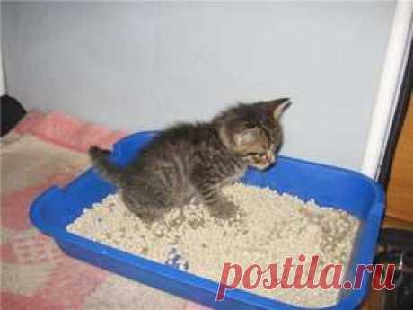 Как приучить котенка ходить в лоток: эксперименты с расположением лотка, а также советы специалистов | Краше Всех