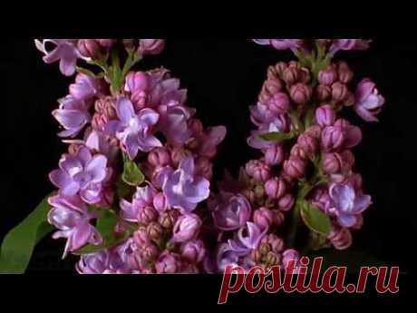 Удивительный Мир! Живые цветы! VsemVseOboVsem. - YouTube