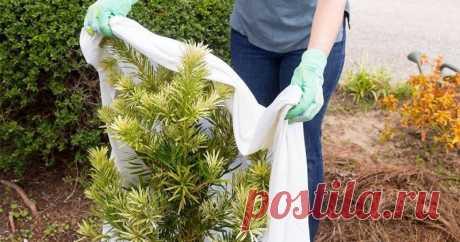 Укрывной материал на зиму для растений. Какой лучше использовать? Любое растение благополучно перенесёт зимние холода, если вы выберете для него правильный укрывной материал. Сегодня выбор достаточно большой.