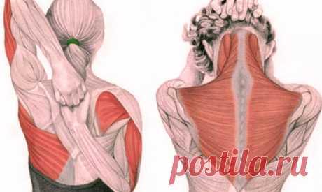 Упражнения для шеи: Освобождают от зажимов и нормализуют давление ~ Шкатулка рецептов