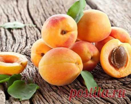 секрет морозостойких абрикосов