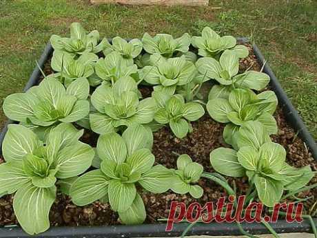(+1) тема - Как сделать компост - несколько способов | ОГОРОД БЕЗ ХЛОПОТ