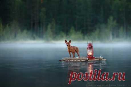 «Однажды утром на озере». Автор фото – Анна Аверьянова: nat-geo.ru/photo/user/296624/ С добрым утром!