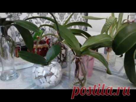 Орхидеи в воде;)На что обратить внимание?