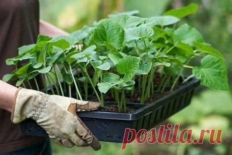 Советы огородникам и цветоводам: Секреты черенков и какую пользу приносят... отходы
