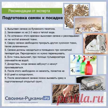 Подготовка семян к посеву | УФМС Паспортный стол РФ