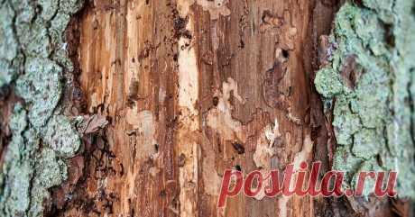 Враги деревянного дома: как бороться с короедом и жуком-точильщиком? Что делать, если вы заметили в стенах вашего дома мелкие дырочки, а в совок собираете мелкую деревянную пыль? Рассказываем о скрытой опасности, которая может таиться в стенах вашего дома.