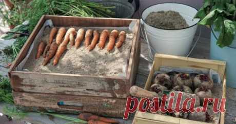 Полезные совет на будущее: как сохранить урожай зимой