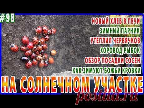 Дарницкий хлеб и печенье в русской печи, самообогреваемый парник, вермиферма, стая божьих коровок.