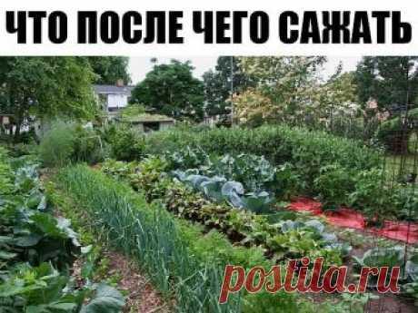 Что после чего выращивать в огороде - сохраните себе эту памятку!  Всем известно, что не следует выращивать одну и ту же культуру на постоянном месте, а лучше менять их местами. А вот, что после чего сажать? Ниже собраны правила для основных культур, выращиваемых в средней полосе.   Картофель. Лучший предшественник – огурцы, капуста. Нельзя высаживать после томатов, перца, физалиса.   Морковь. Хорошо выращивать после картофеля, томатов.   Свекла. Хорошо выращивать после ка...