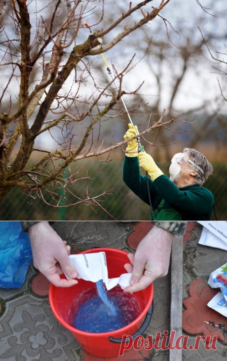 Осенняя обработка плодовых деревьев бордосской жидкостью от болезней и грибковых инфекций | Любимая Дача | Яндекс Дзен