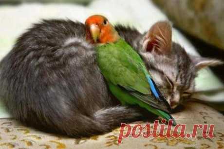 Попугай и котенок устроили драку в Тайване