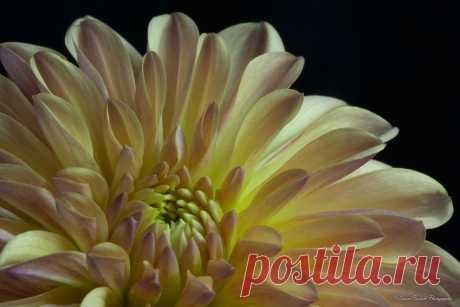 Письмо «сообщение Schamada : Макро - фотографии от DAVID BOSTOCK (21:46 03-06-2014) [3907317/326672349]» — Schamada — Яндекс.Почта