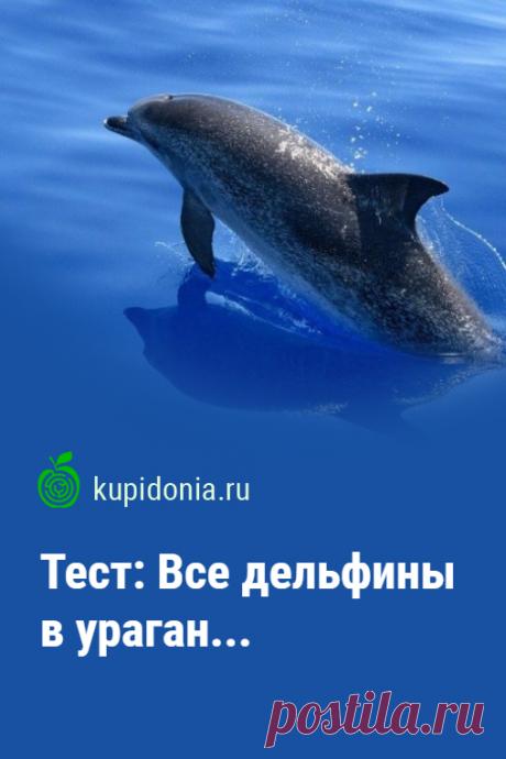 Тест: Все дельфины в ураган... Как хорошо вы знаете дельфинов? Пройдите наш познавательный тест, чтобы проверить свои знания.