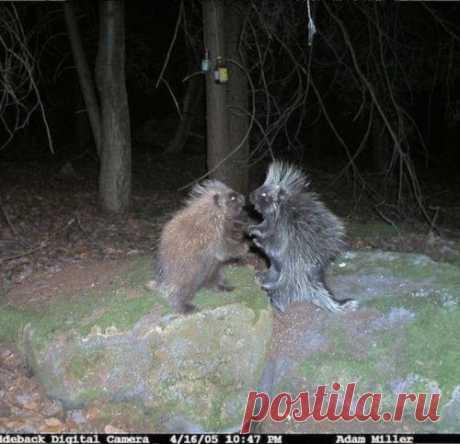 Вот что удалось запечатлеть фотоловушками в лесу ночью. Этим кадрам до сих пор нет объяснения...