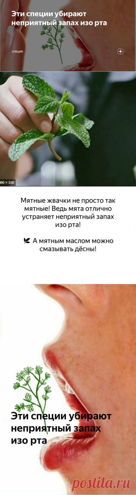 Эти специи убирают неприятный запах изо рта   СПЕЦИЯ   Яндекс Дзен