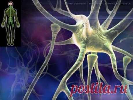 От галлюциногенов мозг рассыпается