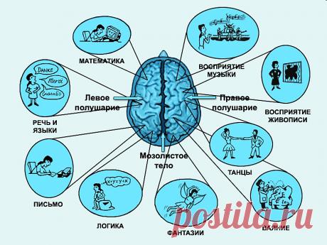 Как при помощи координации движений развивать умственные способности | Я-Родитель | Яндекс Дзен