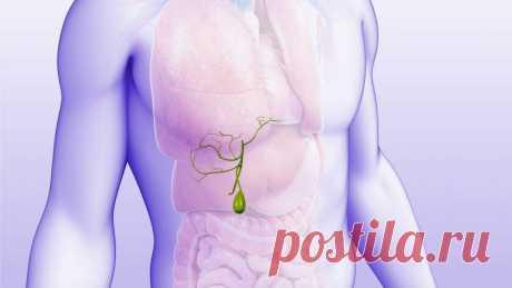Что делать с желчью: гнать или не гнать? Мнение врача-гастроэнтеролога | Все о печени | Яндекс Дзен