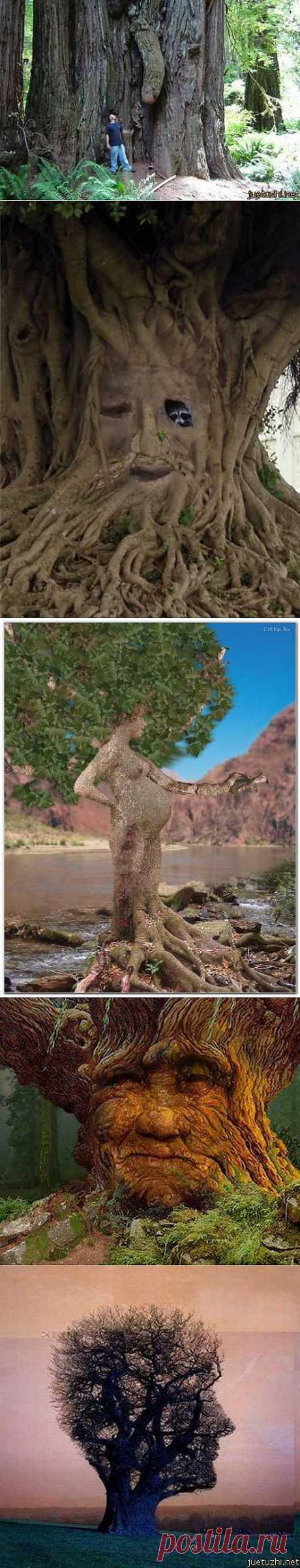 Природа творит чудеса...