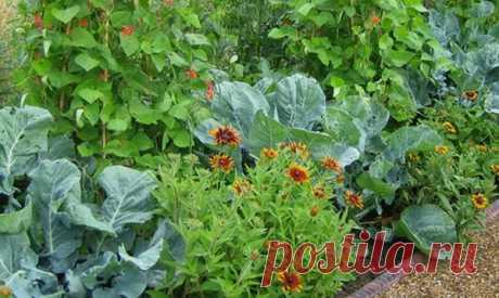 Модный огород. Что вырастить в огороде для красоты и пользы   Блоги о даче, рецептах, рыбалке