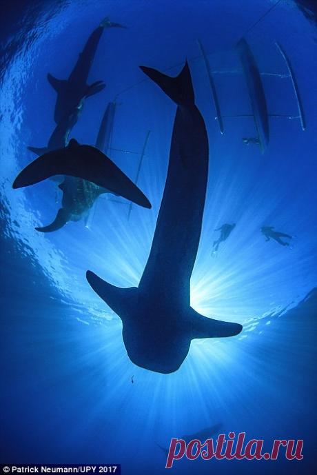 Снимки конкурса подводной фотографии