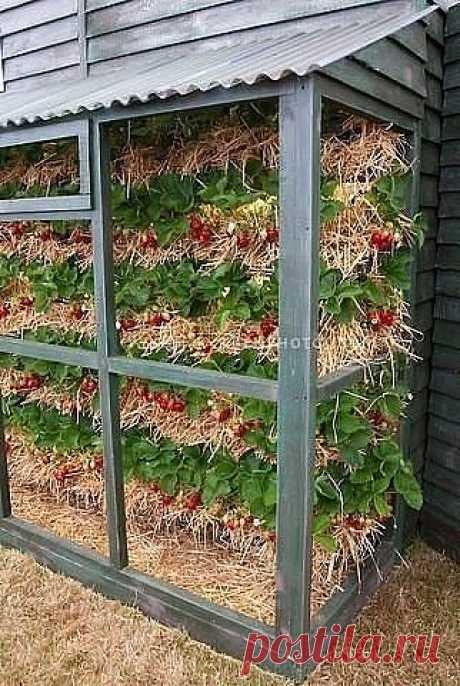 Совет садоводам, которые собираются сменить клубничное место