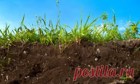 9 ways to return to the soil fertility