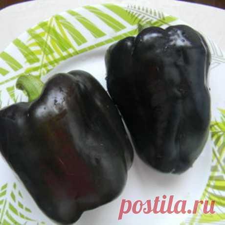 Перец Пурпурный колокол: описание сорта, отзывы, фото | ProPerez.ru
