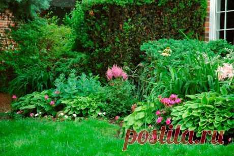 Тенелюбивые кустарники для сада многолетние, фото и названия